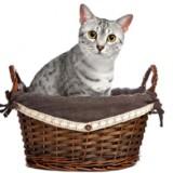 Cat Supplies