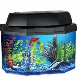 Fish & Aquariums