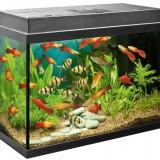 Aquariums & Tanks