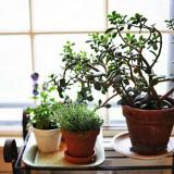 Planters, Pots & Window Boxes