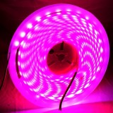 14W Bare Board LED 5050 SMD Rope Light, 60 LED/M, Length: 5m (Magenta)