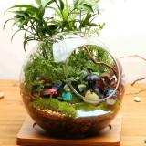 Ball Shaped DIY Moss Micro Landscape Glass Bottle Double Holes Succulent Plants Vase Home Decoration