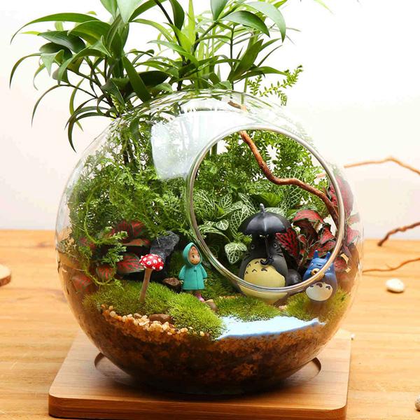 Ball Shaped Diy Moss Micro Landscape Glass Bottle Double