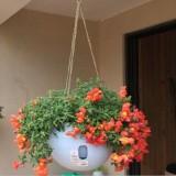 Hanging Plastic Flower Pots Hanging Pots Flower Pot With Hanging Chain, Medium Size:23.2*15.7cm (Random Color)