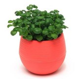 Creative Multi-meat Plant Plastic Flower Pots Stylish Office Mini Flower Pots Mini Flower Seedlings Nursery Pot (Random Color)