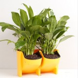 Plant Wall Vertical Indoor and Outdoor Balcony Wall-mounted Flower Pots Creative Combination of Resin Plastic Flower Pots with Removable Pot (Yellow)