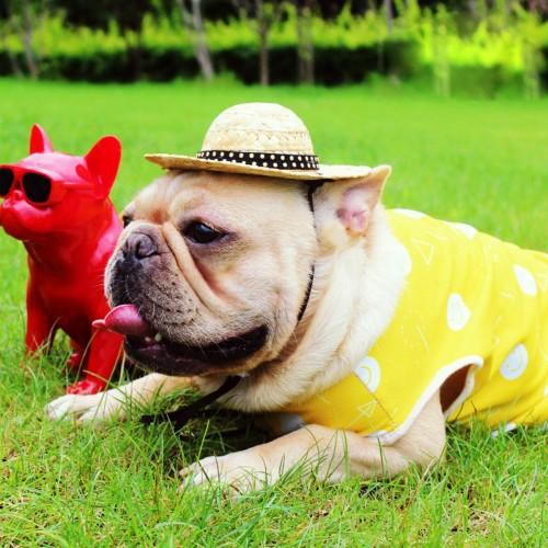 Pet T-shirt Dog Vest Coat Breathable Sunscreen Cooling Clothing Jacket Clothes
