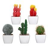 Simulating Cactus Bonsai and Simulating Creative Car Ornaments of Mock Succulents Plants