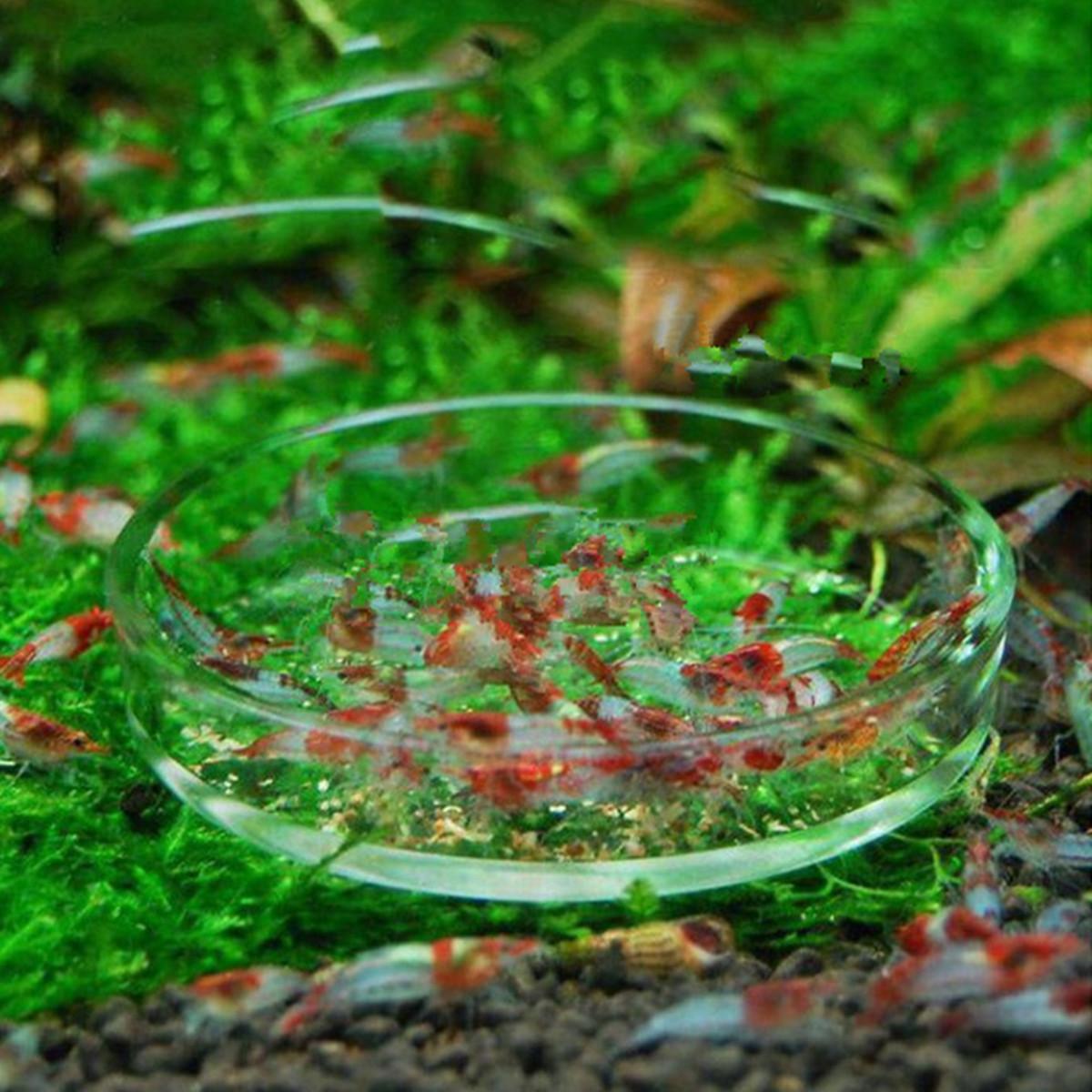 Clear Aquarium Fish Tank Glass Shrimp Feeding Food Dish Feeder Tray Fish Feeder