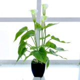 Artificial Flower Calla Plant Potted Home Decoration Green Plant (White Green)