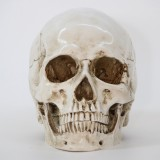Halloween Skeleton Head Decor Skeleton Model Horror Scary Gothic Skull Prop Ornaments Halloween Atmosphere Decoration