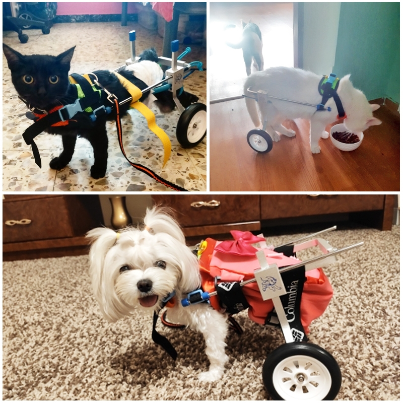 Pet Wheelchair Disabled Dog Old Dog Cat Assisted Walk Car Hind Leg Exercise Car For Dog/Cat Care Size: XXS